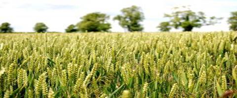 affiliate-internet-marketing-harvest