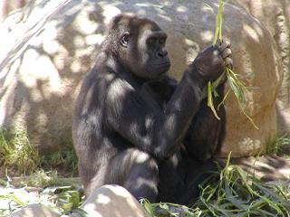 internet-marketing-online-gorilla