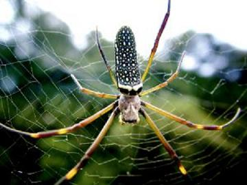 internet-marketing-strategy-spider